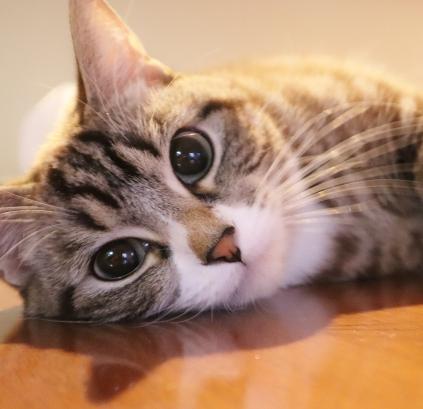 猫,かわいい,みんなのパソコン教室